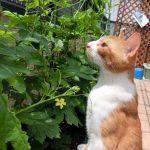 お庭作りの新提案「エディブルガーデン」