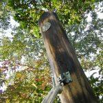お庭のプチリフォーム!古電柱を立てたなら