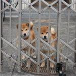 駐車場でワンちゃんを遊ばせたい!!ポチゲートなら小型犬でも安心です。