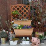 入口の植物がお客様をお迎えします!