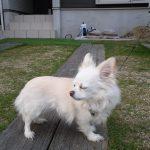 愛犬との散歩コース