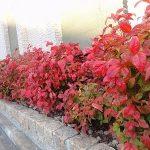 お庭の一部にお勧め植物